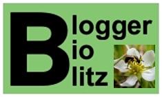 Blogger BioBlitz 2007